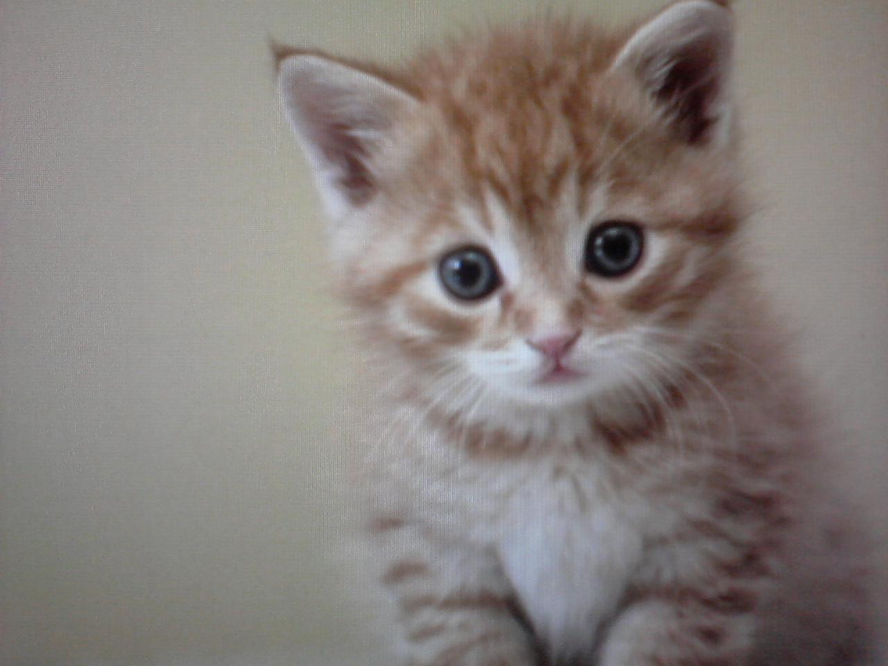 Chaton trop mimi colorier les enfants - Image de chaton trop mimi ...